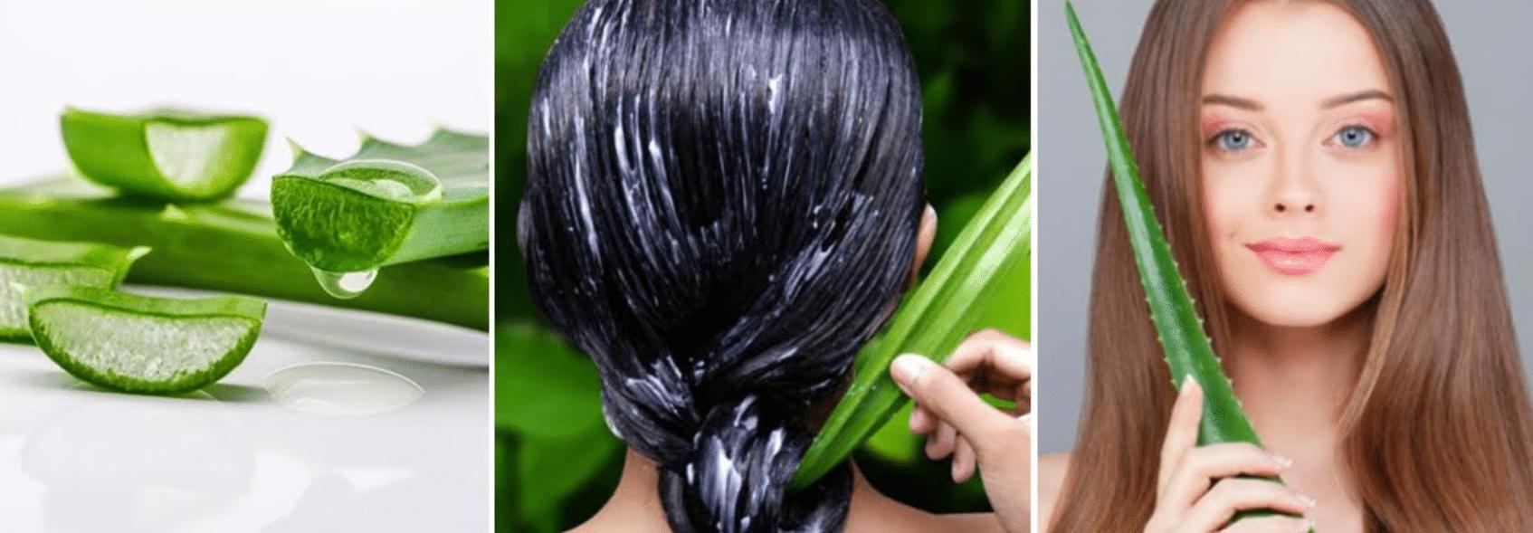 imagens da planta da babosa e de mulheres hidratando o cabelo com ela